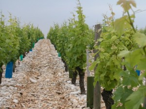 Flint vineyard